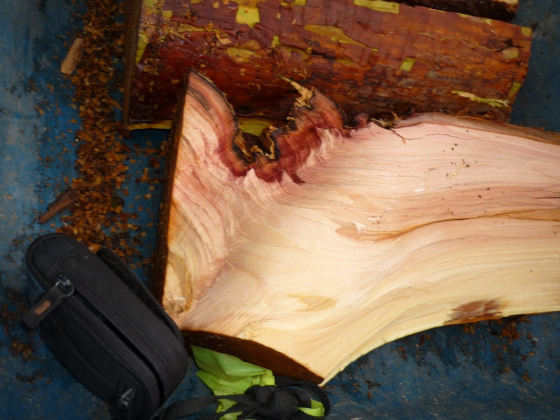 branch collar in madrone